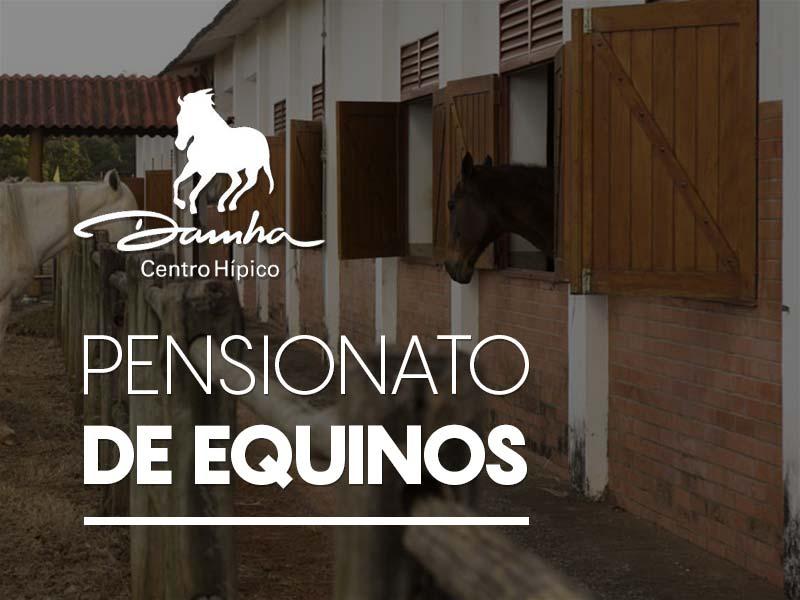 Pensionato de Equinos - São Carlos, SP